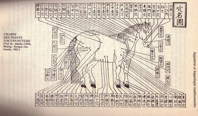 Acupuncture Cheval